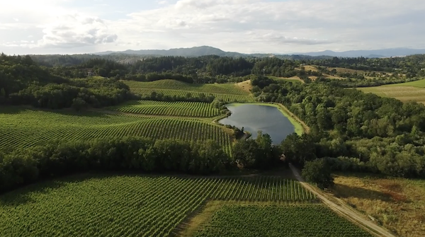 Iron Horse Vineyards View from the air